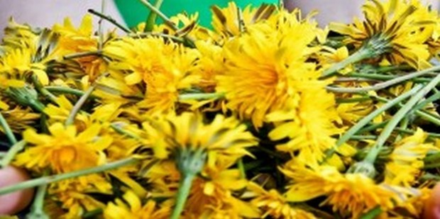dandelions (Cópia)