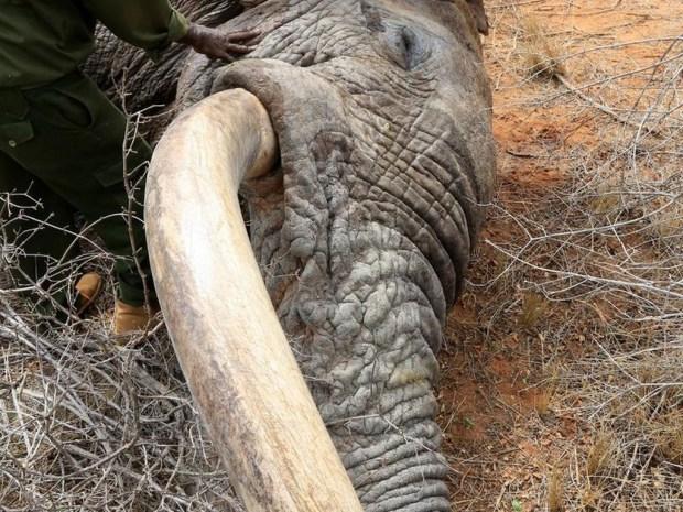 elephant2 (Cópia)