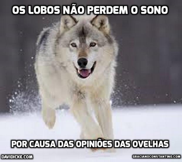 wolf (Cópia)