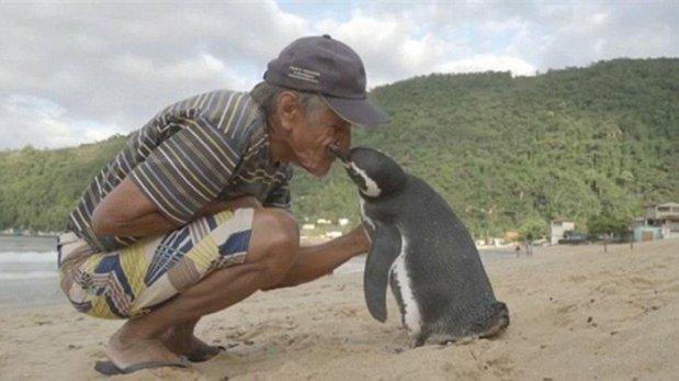 penguin-who-swims-5000-miles-700x392