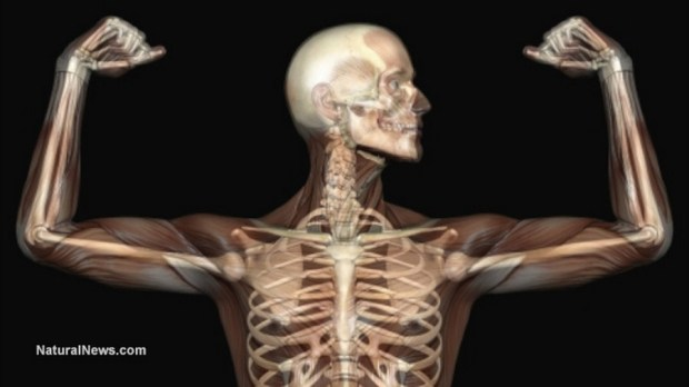 anatomy-human-skeleton-muscles-xray-bones-copiar