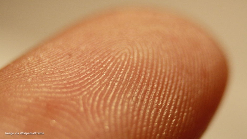 fingerprint-detail-wikipedia-frettie