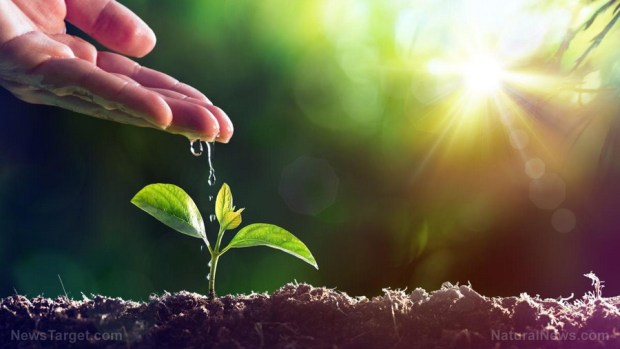 Plant-Water-New-Growth-Seedling-Concept-Life (Copiar)