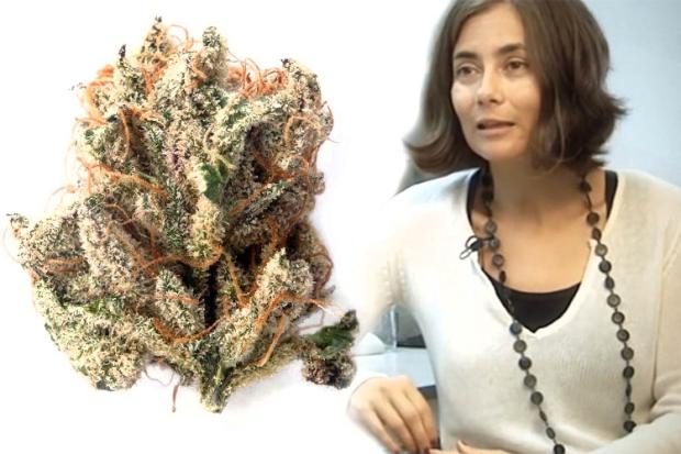 Cannabis-Doctor-12.jpg