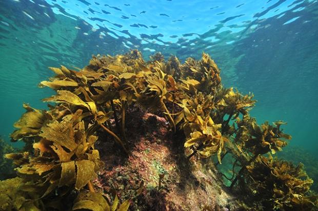 Kelp-5.jpg